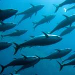 15 Ways to Dress Up a Tin of Tuna